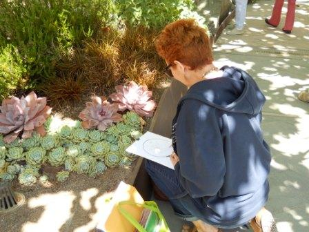 After discussing drawings of natural specimens, teachers drew details of succulents and leaves in the Getty's Central Garden.