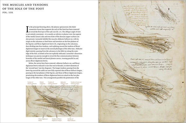 From the new book: Leonardo's exploded view of the muscles and tendons of the soles of the foot, with anatomical notes in English