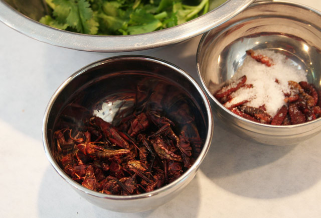 Aztec snacks: grasshoppers and worms