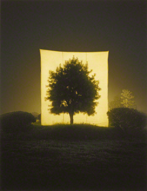 Tree #11 / Myoung Ho Lee