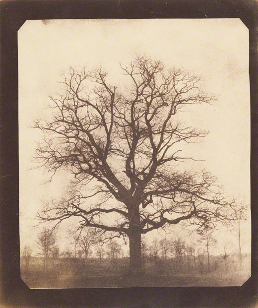 An Oak Tree in Winter / Talbot