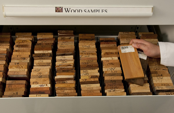The Getty Conservation Institute's Reference Collection of Artist Materials includes wood samples from all over the world.