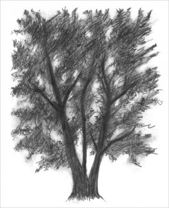 Tree drawing by Rebecca Edwards inspired by Myoung Ho Lee's photograph