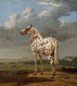 The Piebald Horse / Paulus Potter