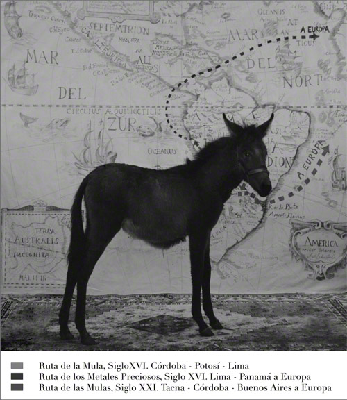 Anthropologia de la Mula, Anthropology of the Mule / Adriana Bustos