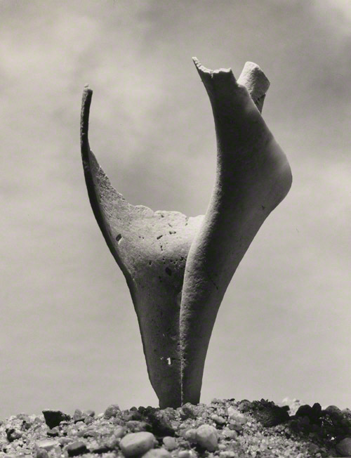 Broken Shell / Andreas Feininger