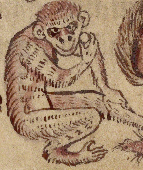 Detail of menacing ape in Adam Naming the Animals in the Northumberland Bestiary / English