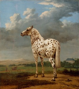 "The ""Piebald"" Horse,  Paulus Potter, Dutch, about 1650 - 1654, Oil on canvas, 19 1/2 x 17 11/16 in., The J. Paul Getty Museum"