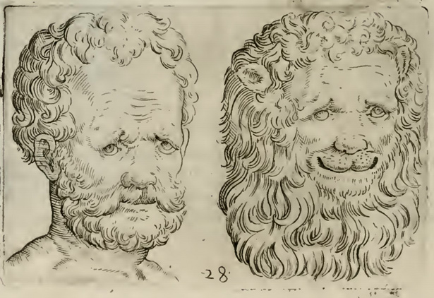 Physiognomic illustration of man and lion in Giambattista della Porta's De humana physiognomia