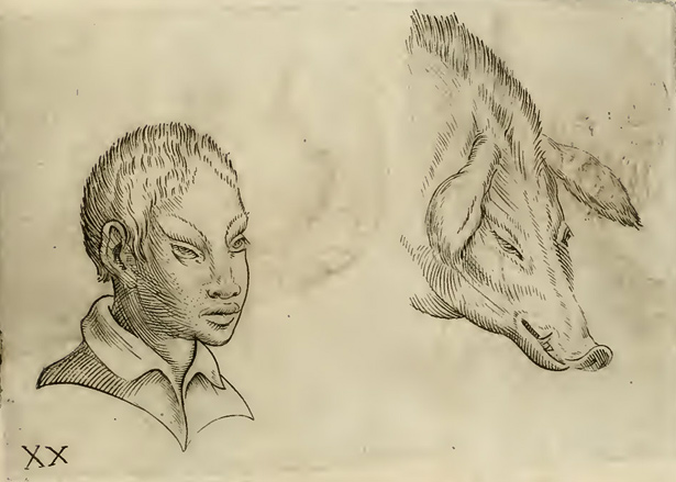 Physiognomic illustration of Asian man and swine in Giambattista della Porta's De humana physiognomia
