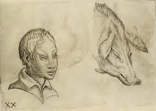 Physiognomic illustration of Asian man and swine in Giambattista della Porta's De humana physiognomia