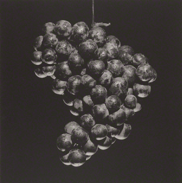 Grapes / Robert Mapplethorpe