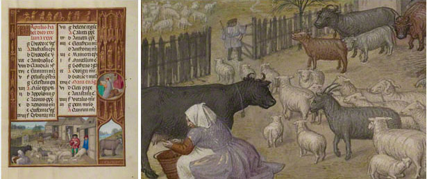 Farm Animals, Milking, and Buttermaking / Zodiacal Sign of Taurus
