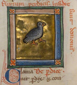 A Partridge (detail)/from a bestiary
