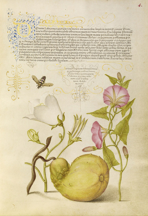 Fly or Blister Beetle, Willow Bellflower, Gourd, and Bindweed / Joris Hoefnagel