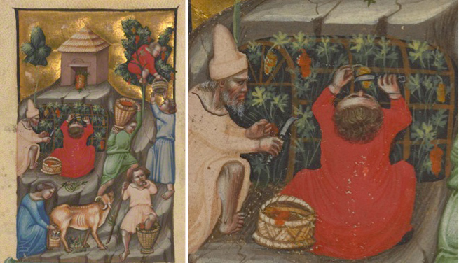 Harvest Scene / Illustratore (possibly Andrea da Bologna)