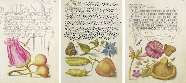 Pages from the Model Book of Calligraphy / Georg Bocskay, scribe, and Joris Hoefnagel, illuminator,