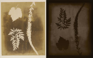 Left: Arrangement of Botanical Specimens, 1838m William Henry Fox Talbot. Photogenic drawing negative, 8 13/16 x 7 1/4 in. The J. Paul Getty Museum, 84.XM.1002.10. Right: Arrangement of Botanical Specimens, 1839, 2008, Hiroshi Sugimoto. Gelatin silver print, 36 7/8 x 29 1/2 in. The J. Paul Getty Museum, 2013.64.9. © Hiroshi Sugimoto