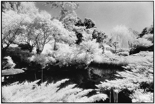 Lao-tzu's Dream / Chris Keledjian