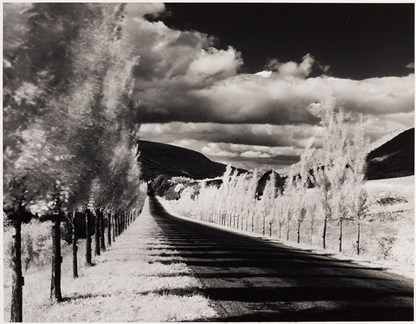 Road and Poplar Trees in the Vicinity of Naples, New York / Minor White