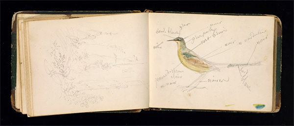 Rosa Bonheur sketchbook: bird