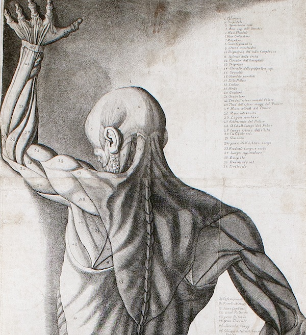 Anatomy in Wax, Wood, and Ink