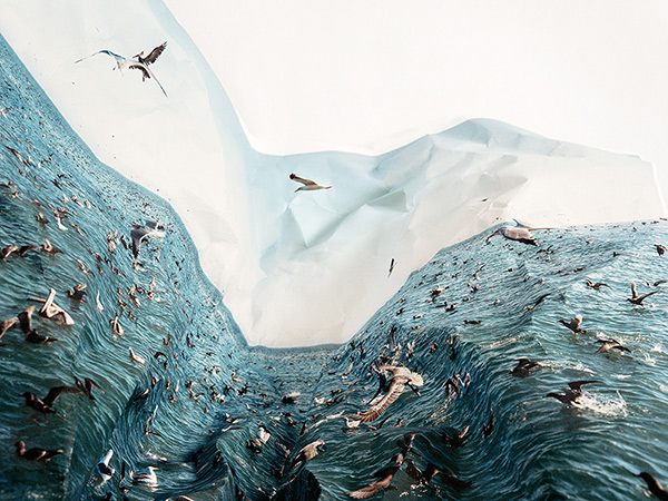 Feeding Frenzy / Laura Plageman