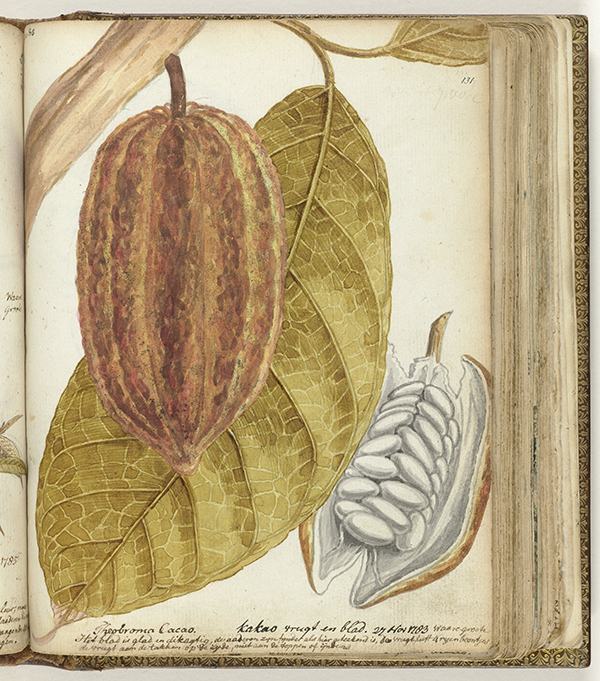 Cacao Fruit and Leaf / Jan Brandes