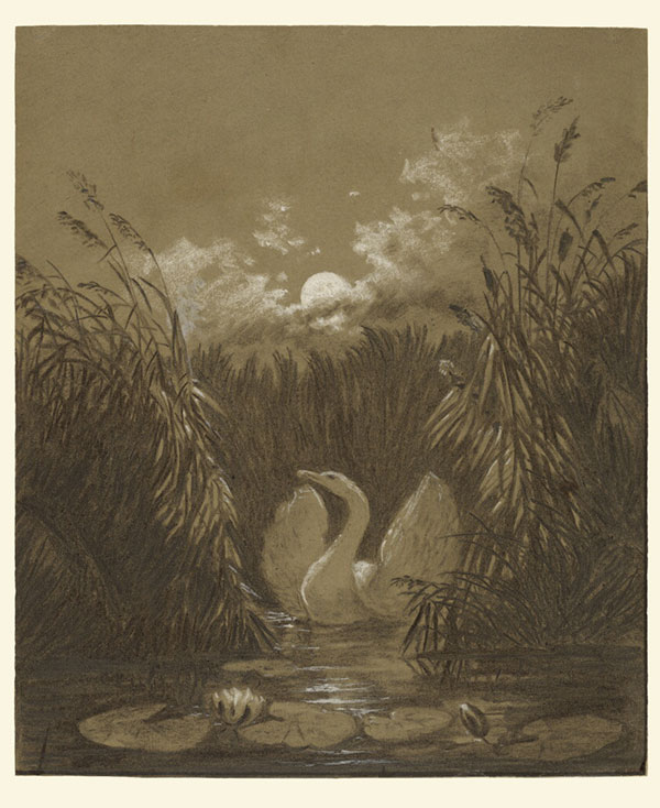 A Swan among Reeds by Moonlight, September 18, 1852, Carl Gustav Carus, charcoal with white chalk heightening on brown paper. The J. Paul Getty Museum.