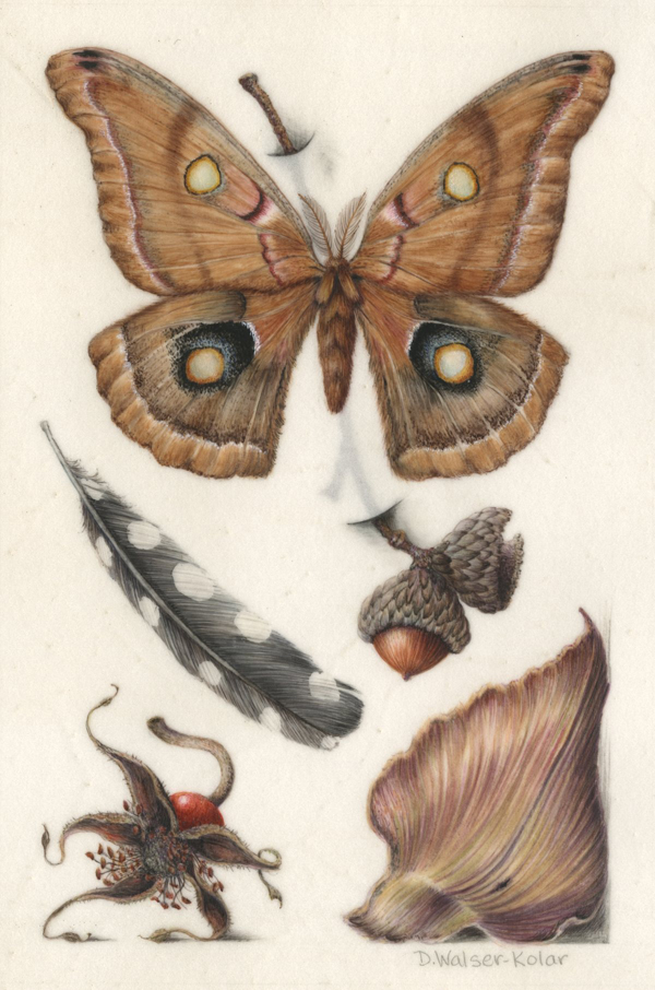 Hoefnagel-Inspired illumination of a moth and acorn / Denise Walser-Kolar