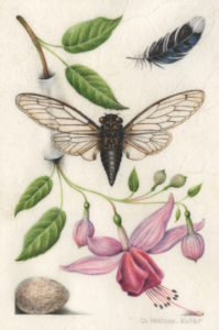 Hoefnagel-Inspired illumination showing a fly and a fuchsia