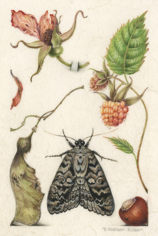 Hoefnagel-Inspired illumination showing a moth and berries