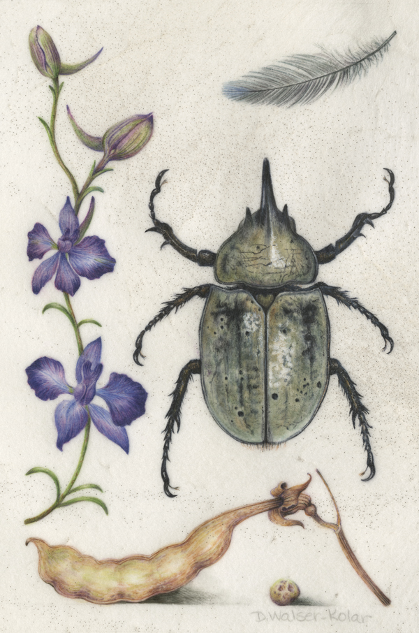 Hoefnagel-Inspired illumination showing a beetle, feather, and seed pod