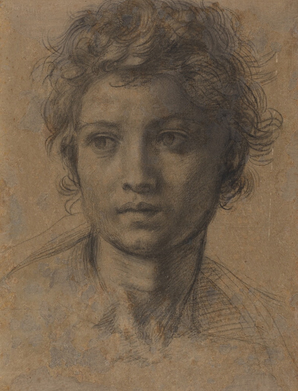 Study for the Head of Saint John the Baptist / Andrea del Sarto