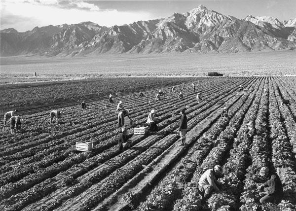 Potato Field / Adams