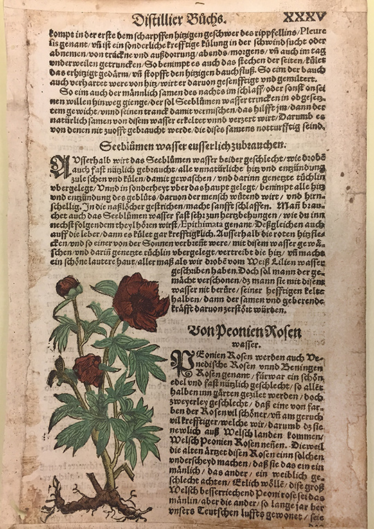 Recipe for distilling peony water / Walther Hermann Ryff