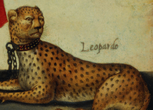 Detail of the cheetah in an azappo archer with a leopard