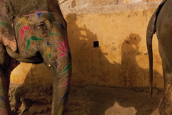 Tourist elephants at Amber Fort, Jaipur, Rajasthan