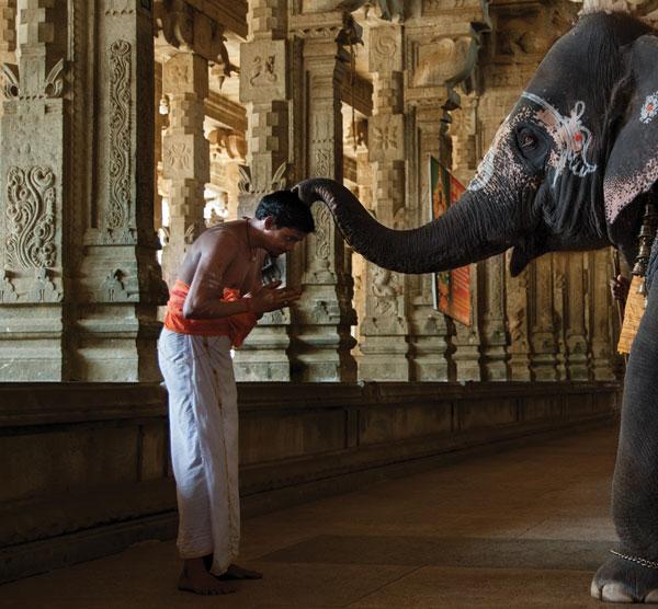 Elephant blesses priest in temple. Jambukeswarar Temple, Thiruvanaikaval, Tamuil Nadu, India