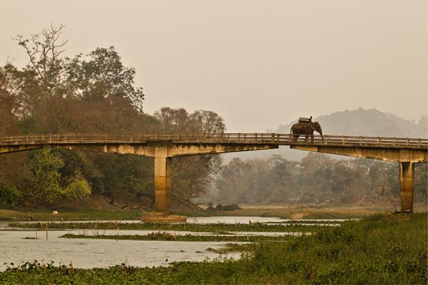 A safari elephant and mahout crosses the bridge to Kazaringa National Park, Assam.