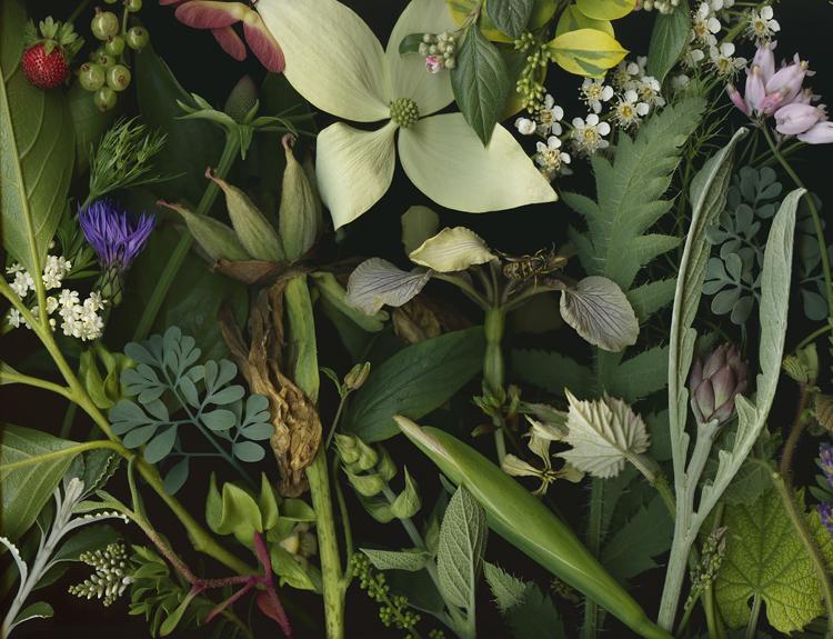 Botanical photograph / Deb Stoner