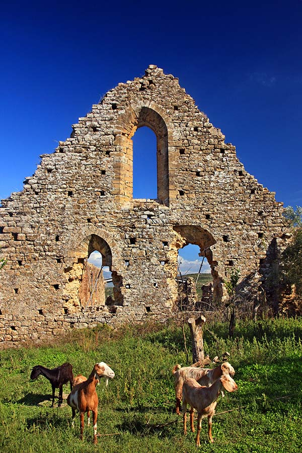 Goats stand in front of the Frankish monastery of Isova in Greece.