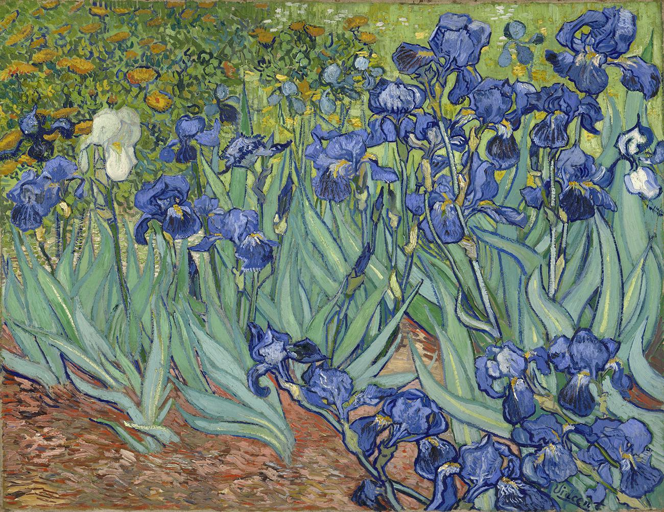 Irises / Van Gogh