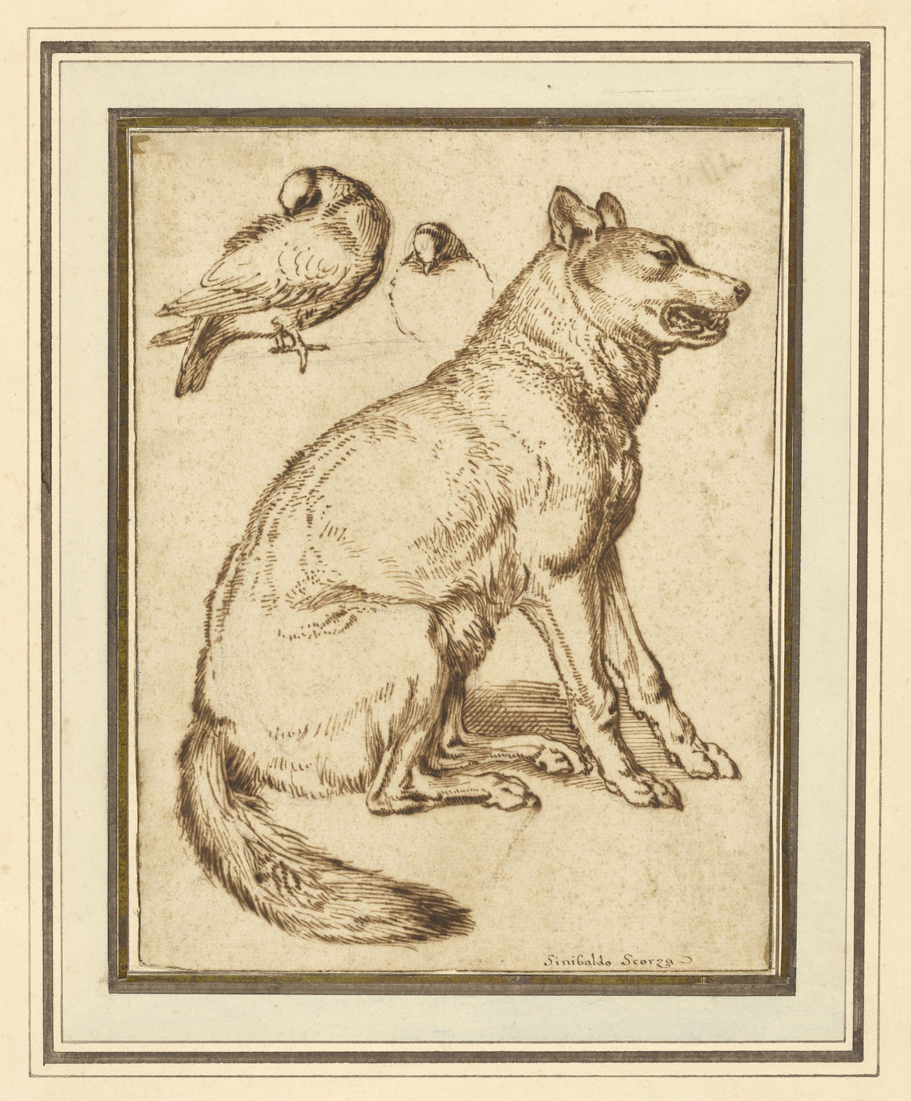 A Wolf and Two Doves / Scorza