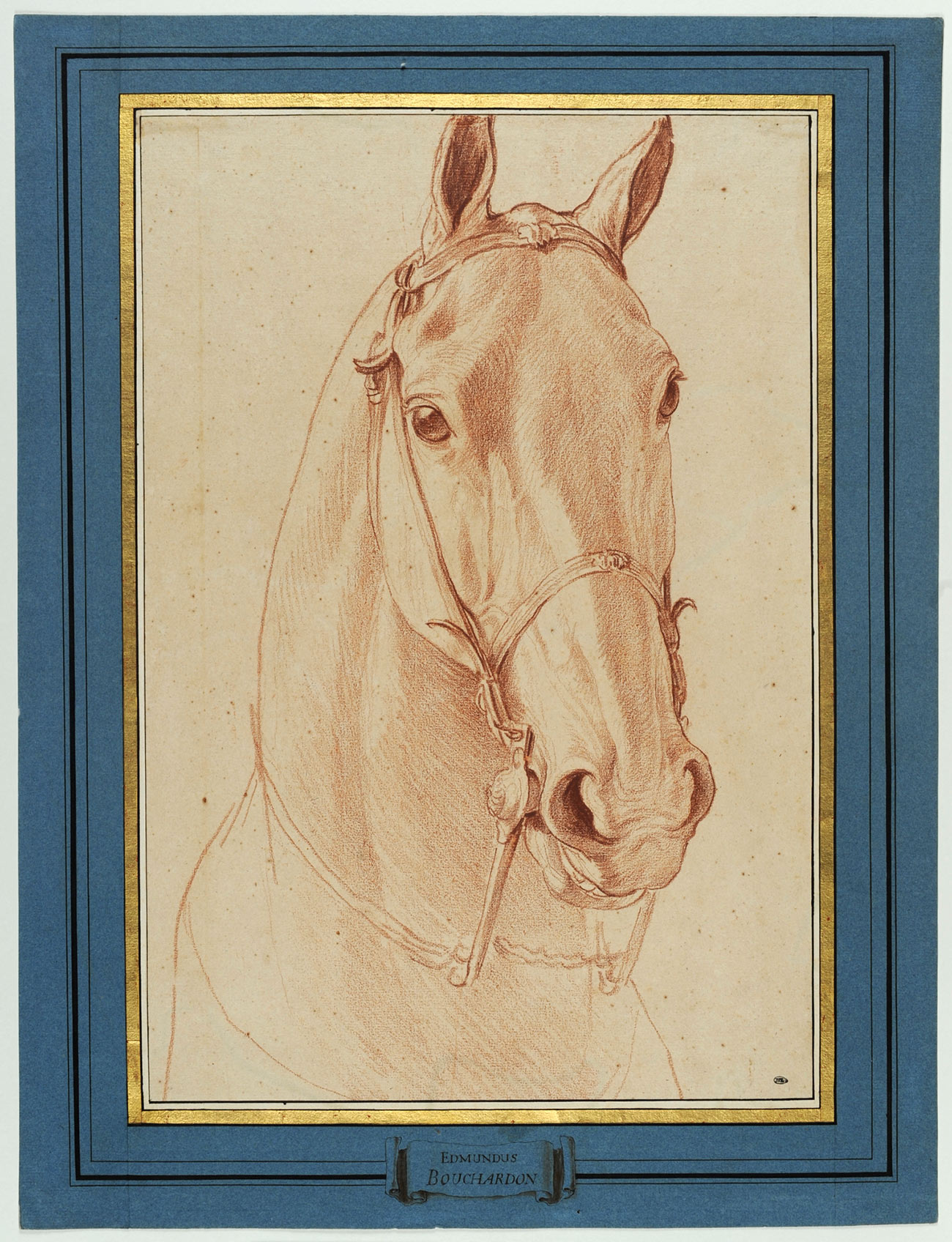 Sketch in red-brown chalk of the head of a horse, which faces the viewer