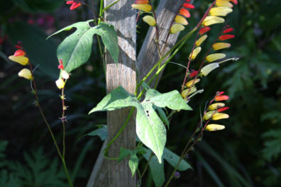 You Asked, We Answered: The Mystery Plant Is…