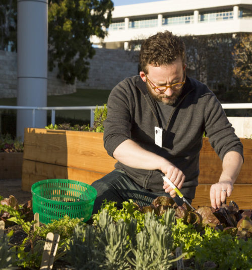 Getty Salad Garden: Julian Hoeber