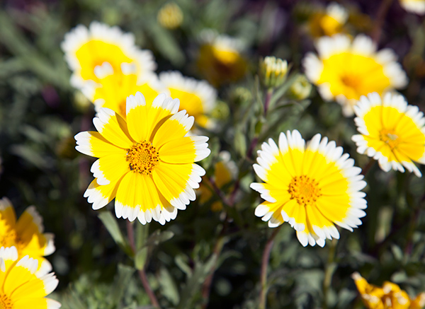 For California Gardeners, Winter Is the New Summer