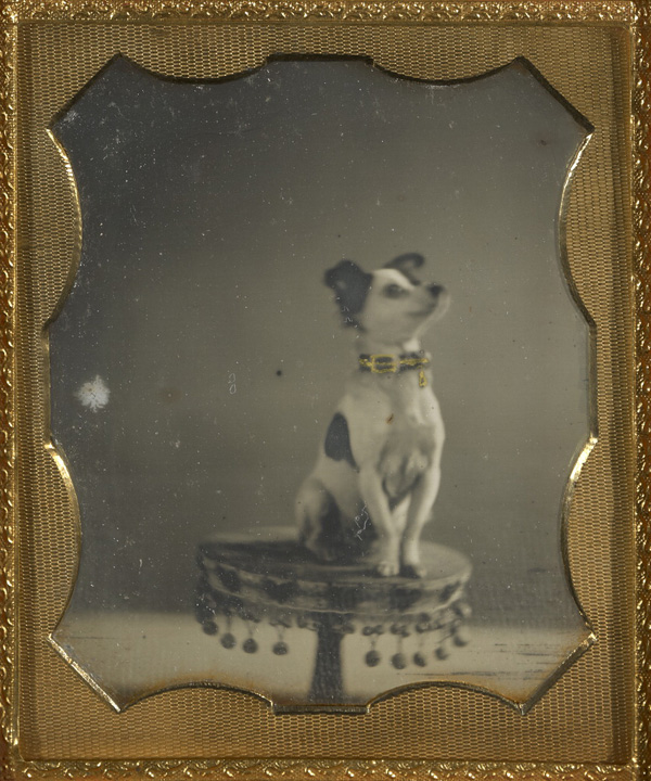 [Dog sitting on a table]; Unknown maker, American; about 1854; Hand-colored daguerreotype; 1/6 plate, Image: 6.8 x 5.7 cm (2 11/16 x 2 1/4 in.), Mat: 8.3 x 7 cm (3 1/4 x 2 3/4 in.); 84.XT.1582.16