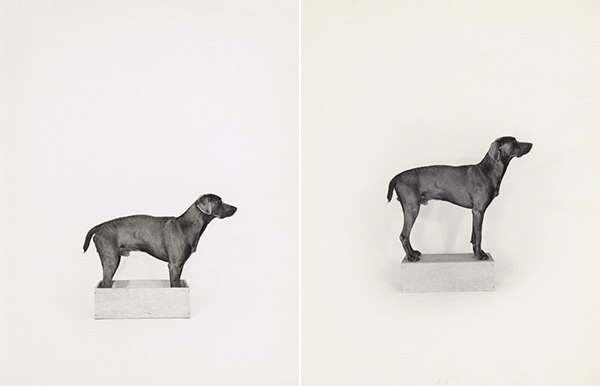 In the Box/Out of the Box / William Wegman